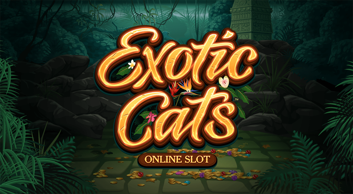 try your luck at a hot new slots game called exotic cats